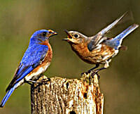 Does the Caged Bird Still Sing? or, GPS and the Bluebird of Happiness