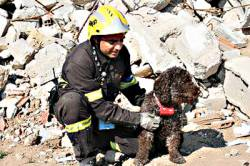 Search and Rescue Dog Positioning System Wins 2009 European Satellite Navigation Grand Prize